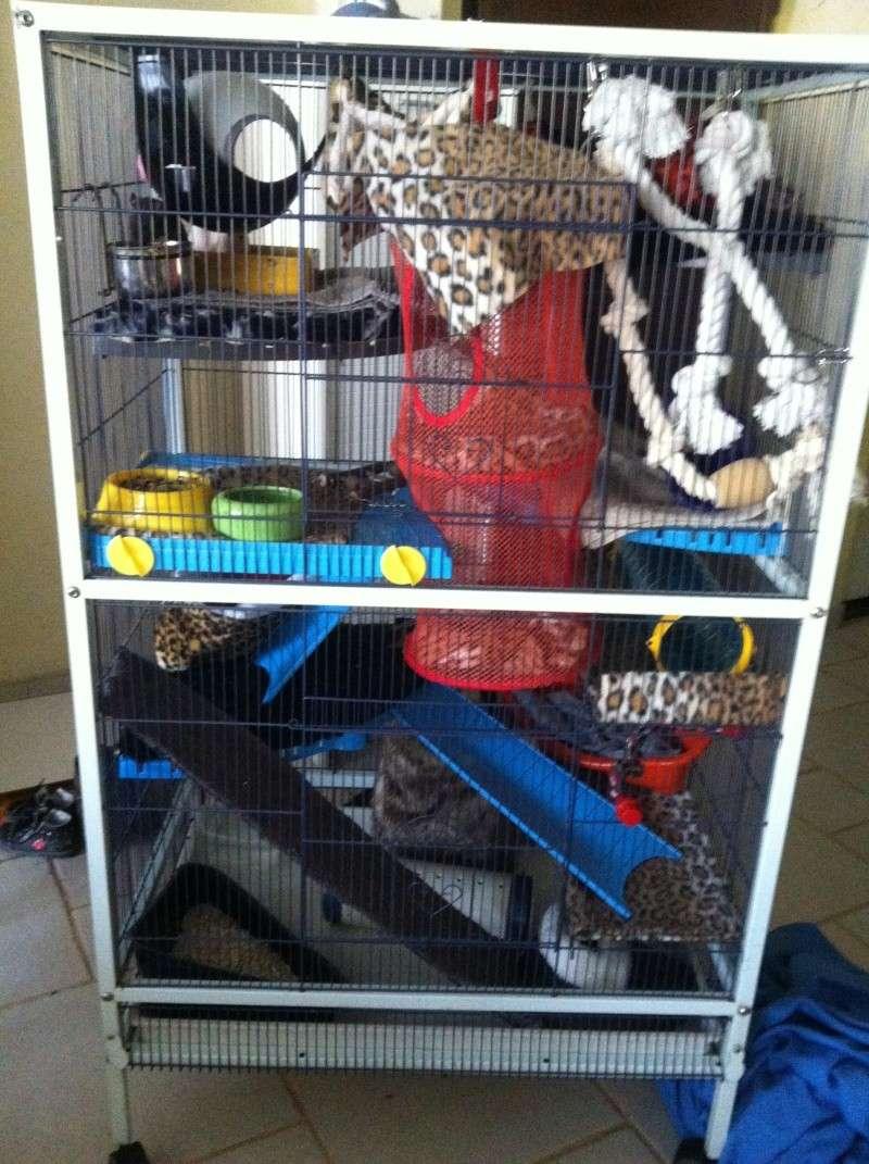 cage reamenagée photos!!! Img_3438