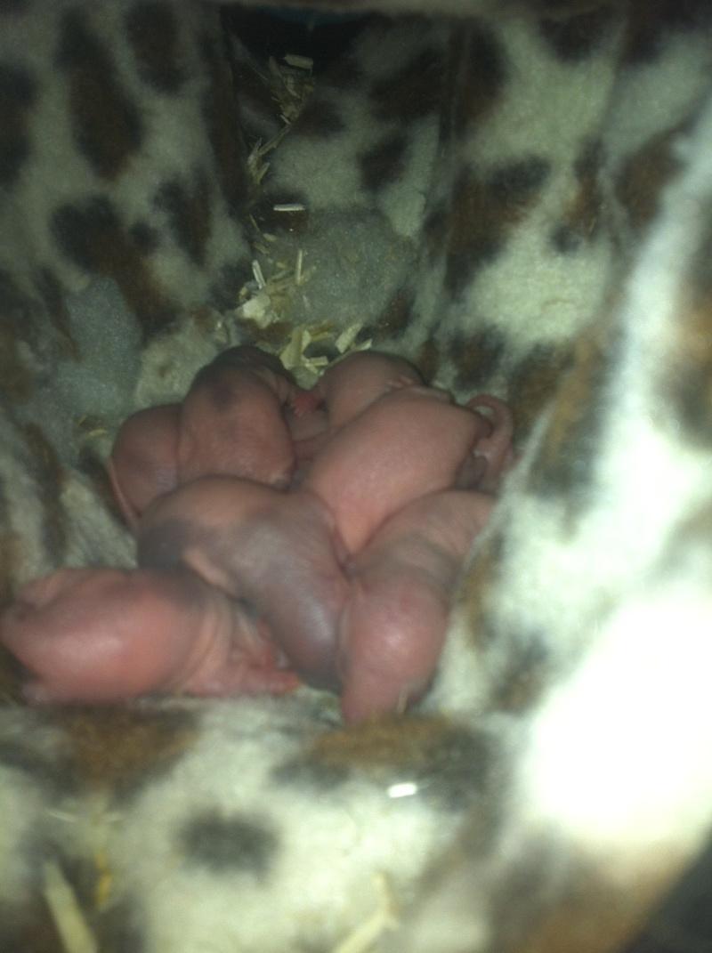 haska et ses bebes photos !!! nouvelles photos !!! trop beaux !!!lool - Page 4 Img_3631