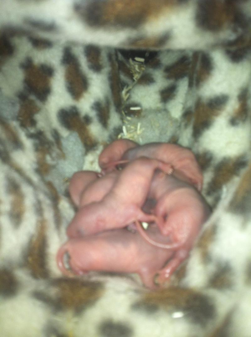 haska et ses bebes photos !!! nouvelles photos !!! trop beaux !!!lool - Page 4 Img_3633