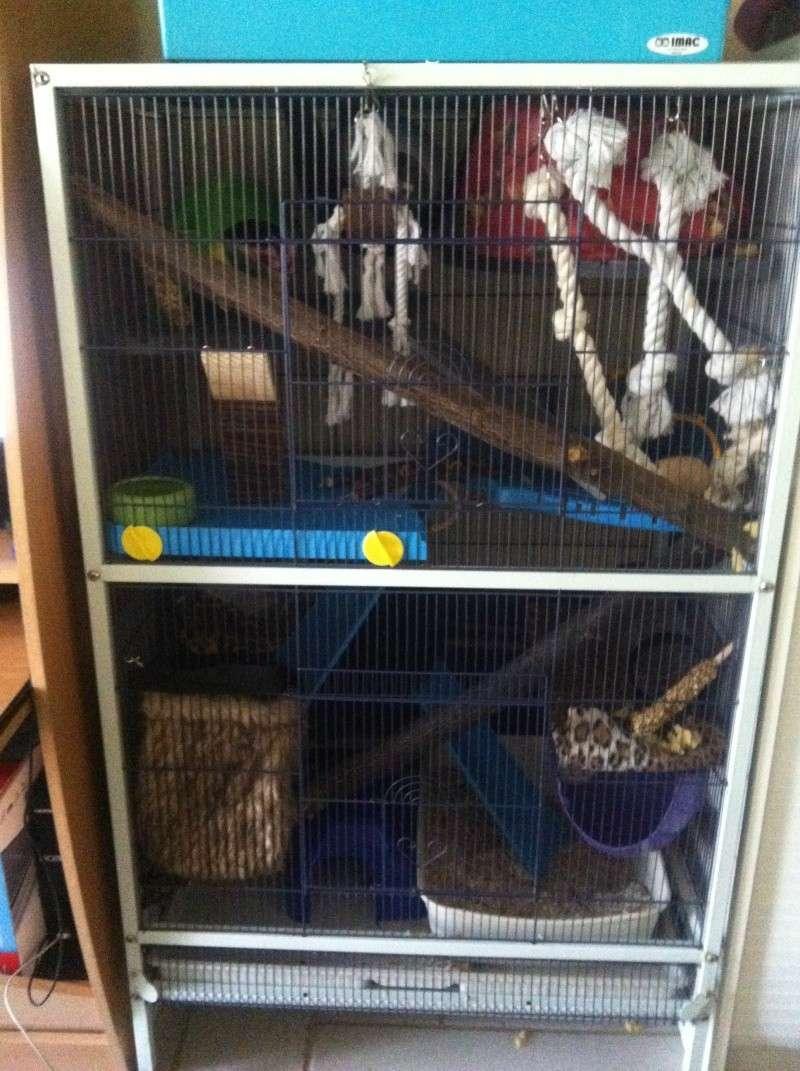 cage reamenagée photos!!! Img_3710