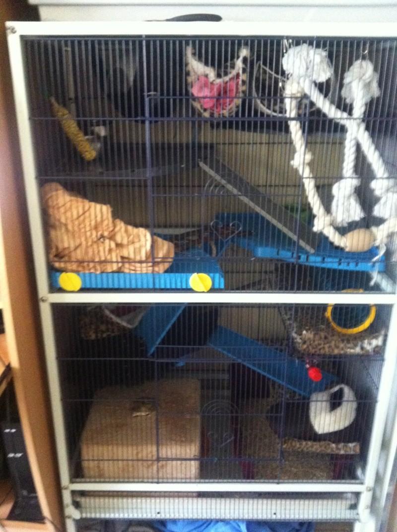 cage reamenagée photos!!! Volier10