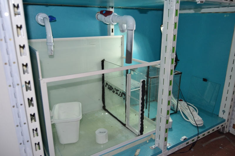 mes poissons poussent les murs pour 430 litres Dsc_0412