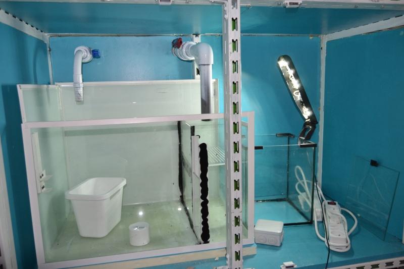 mes poissons poussent les murs pour 430 litres Dsc_0413