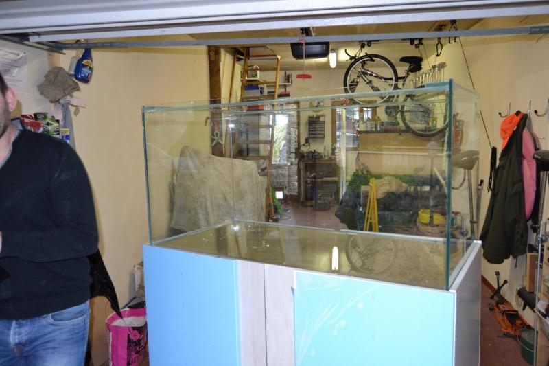 mes poissons poussent les murs pour 430 litres Dsc_0421