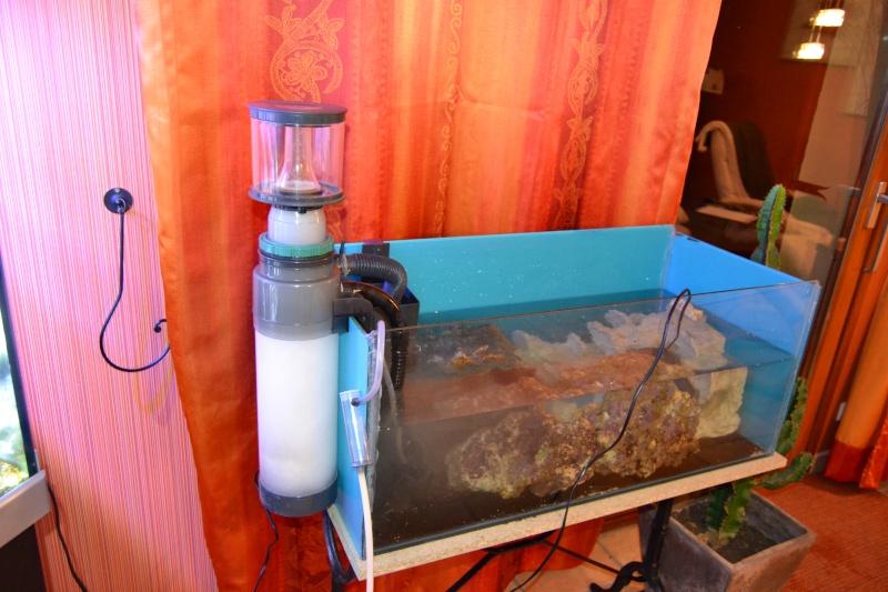 mes poissons poussent les murs pour 430 litres Dsc_0423