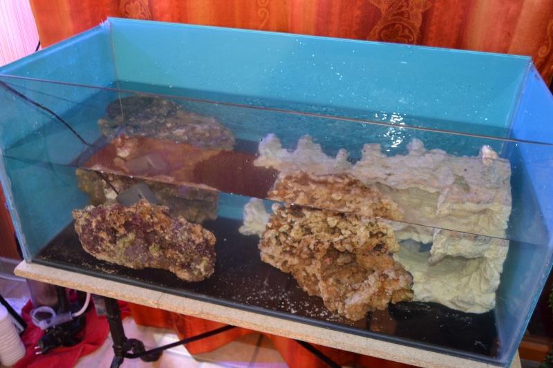 mes poissons poussent les murs pour 430 litres Dsc_0424