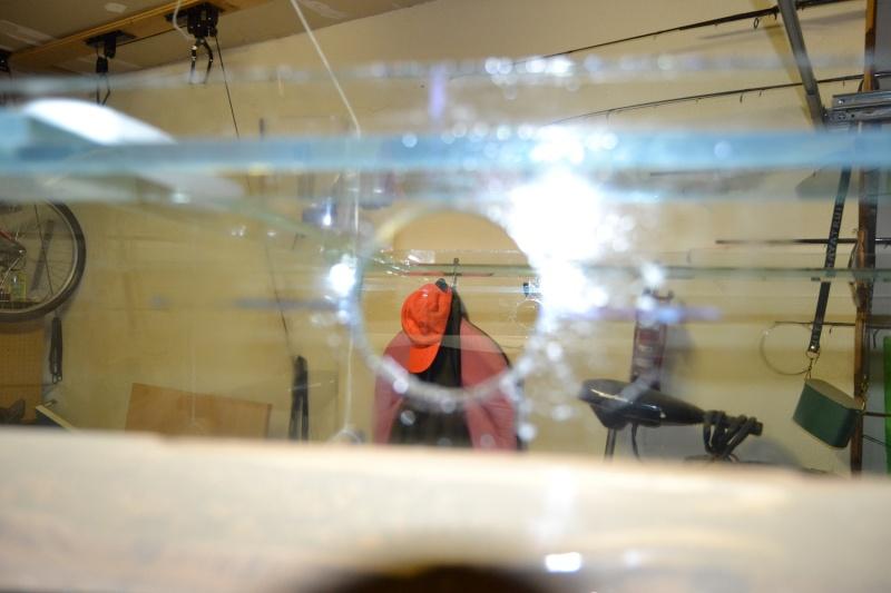 mes poissons poussent les murs pour 430 litres Dsc_0437