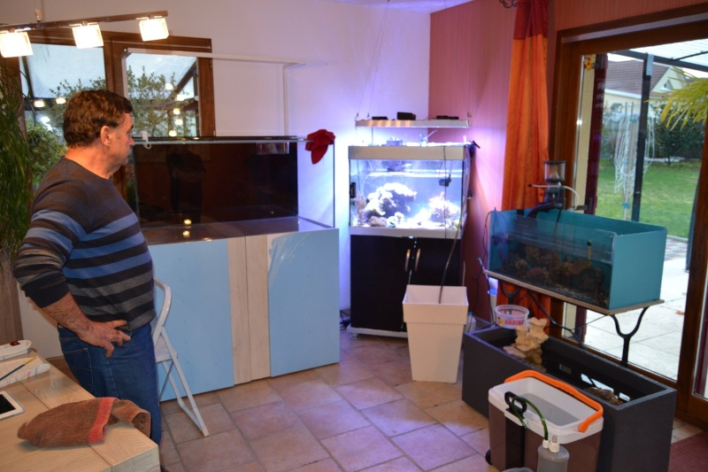 mes poissons poussent les murs pour 430 litres Dsc_0446