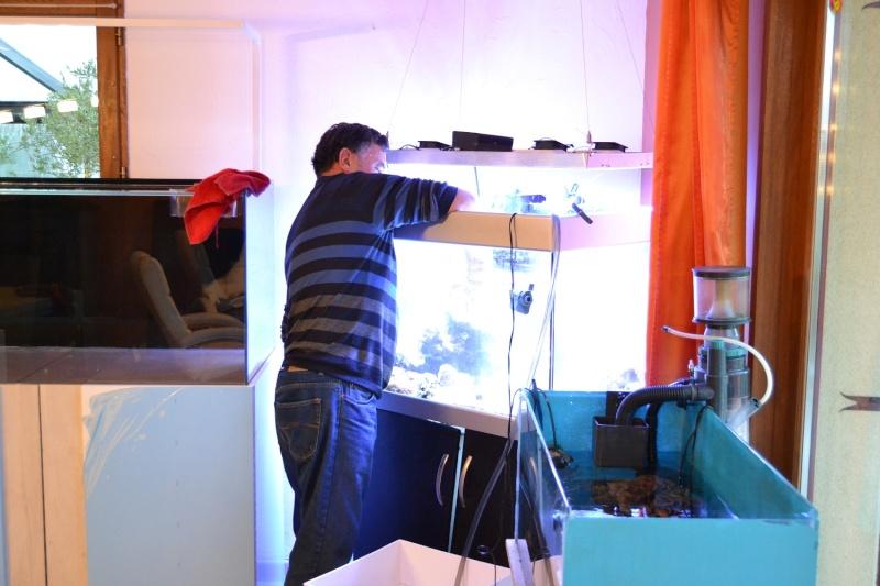 mes poissons poussent les murs pour 430 litres Dsc_0447