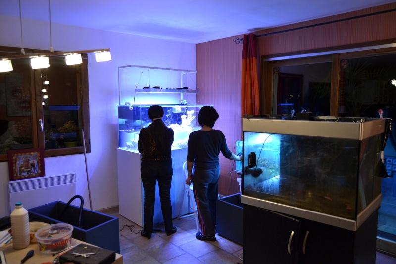 mes poissons poussent les murs pour 430 litres Dsc_0448