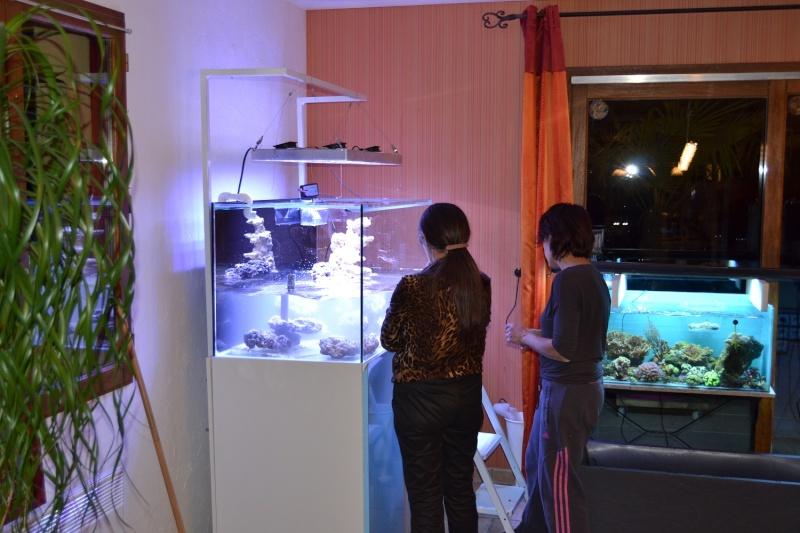 mes poissons poussent les murs pour 430 litres Dsc_0449