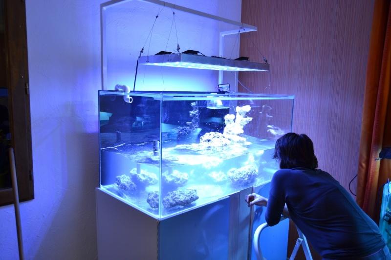mes poissons poussent les murs pour 430 litres Dsc_0450