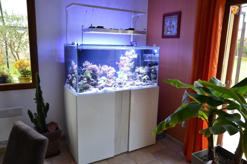mes poissons poussent les murs pour 430 litres Dsc_0451