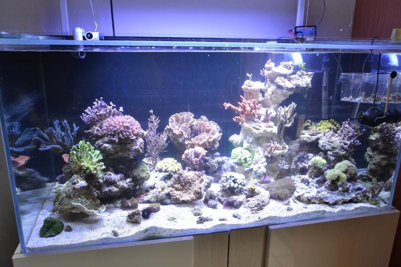 mes poissons poussent les murs pour 430 litres Dsc_0452