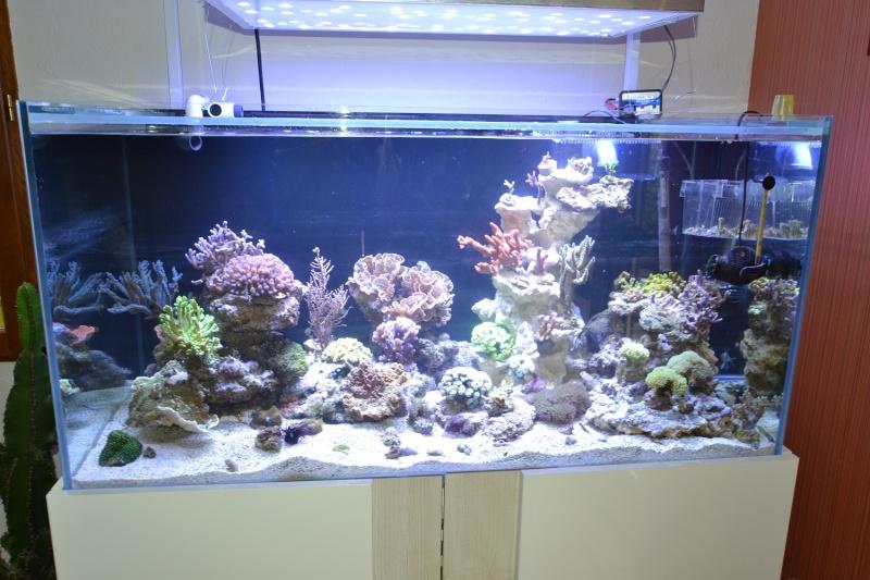 mes poissons poussent les murs pour 430 litres Dsc_0454