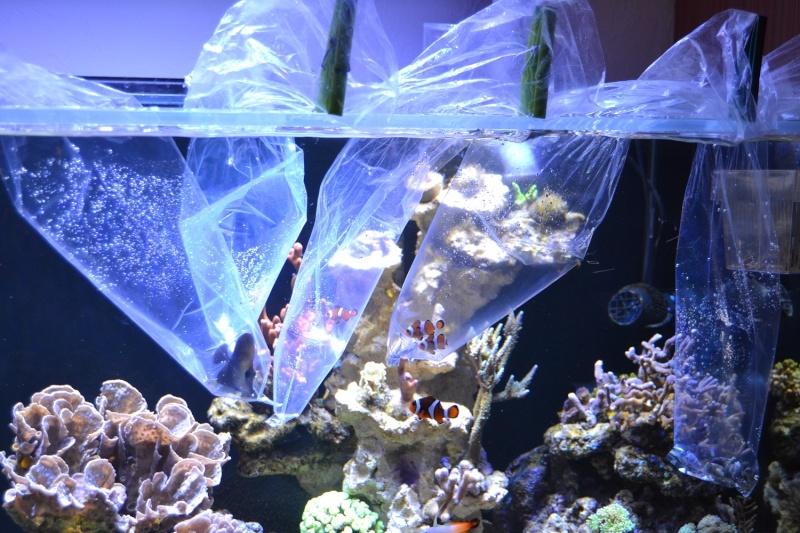 mes poissons poussent les murs pour 430 litres - Page 2 Dsc_0510