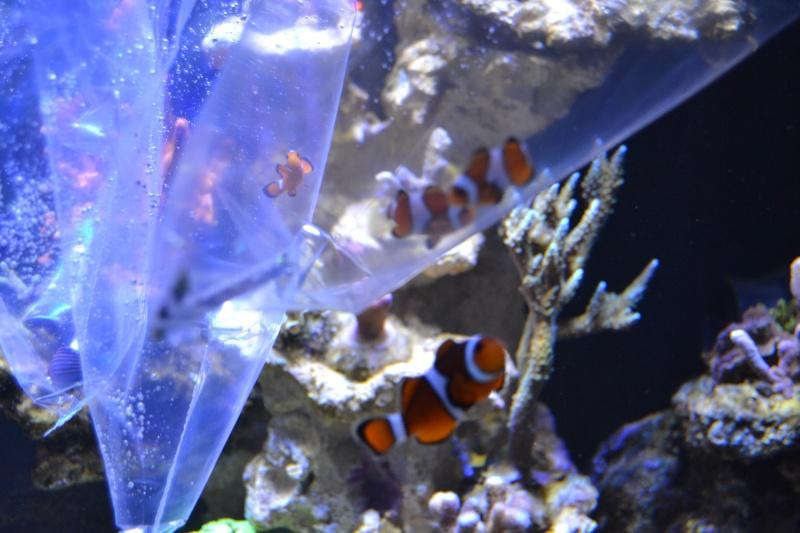 mes poissons poussent les murs pour 430 litres - Page 2 Dsc_0512