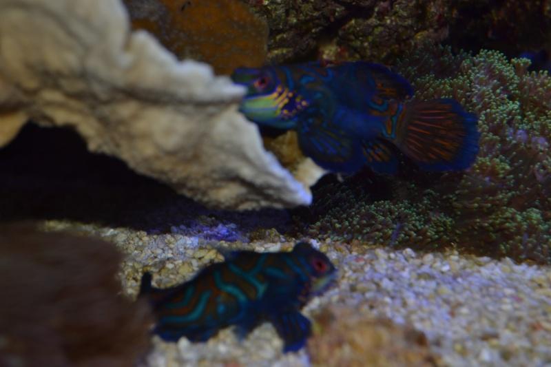 mes poissons poussent les murs pour 430 litres - Page 2 Dsc_0513