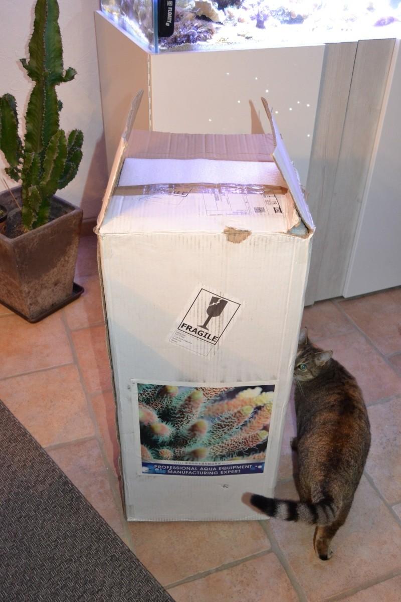 mes poissons poussent les murs pour 430 litres - Page 3 Dsc_0518