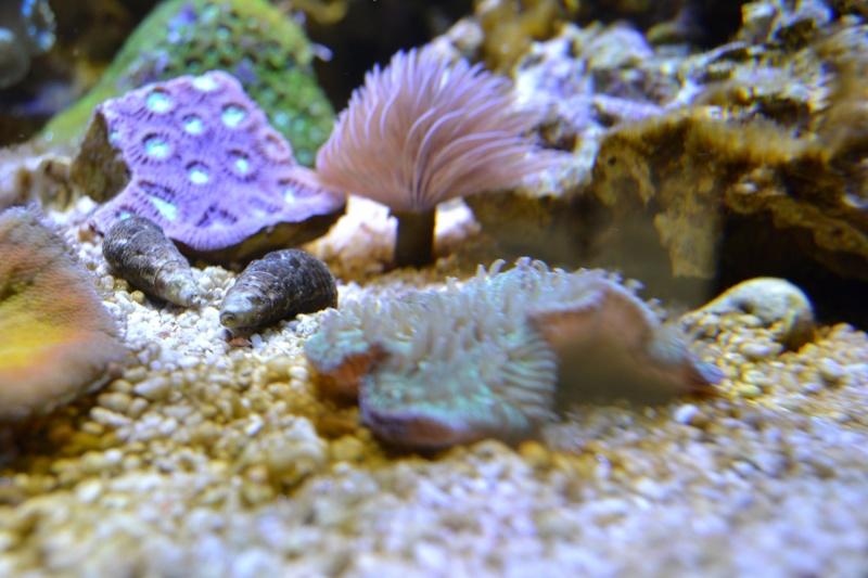 mes poissons poussent les murs pour 430 litres - Page 3 Dsc_0525