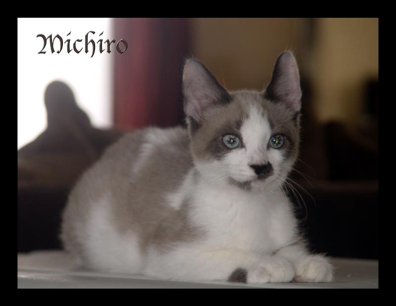 Michiro le rescapé Michir17
