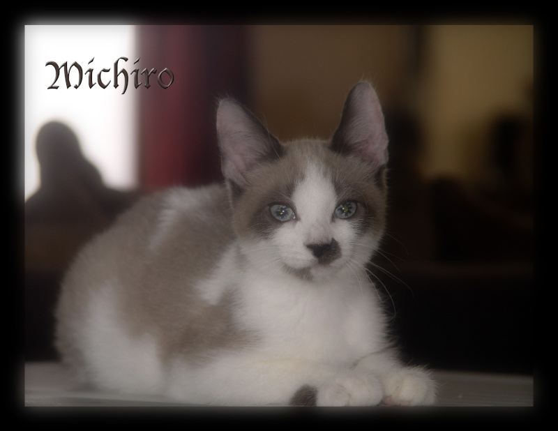 Michiro le rescapé Michir19