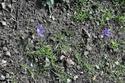 Safran  (du crocus sativus )  _dsc4813