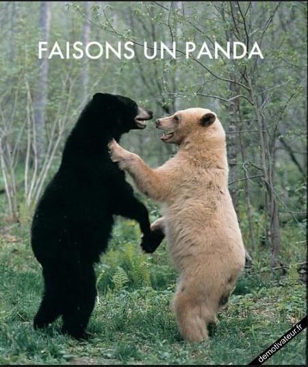 I love panda  Signa_10