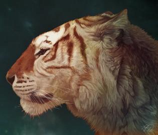 Réserve naturelle - Liste des montures Tigre_10