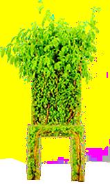 سكرابز اخضر 2014 1212