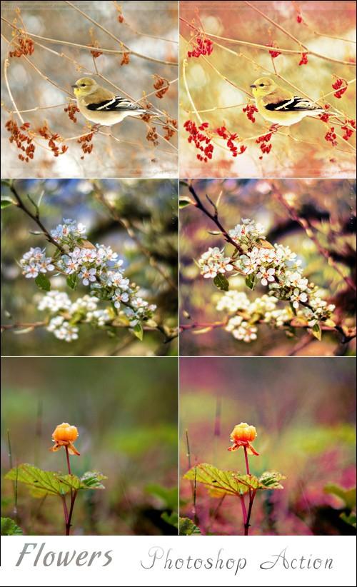 اكشن بتاثير ع الازهار - Action Flowers - صفحة 3 Action11