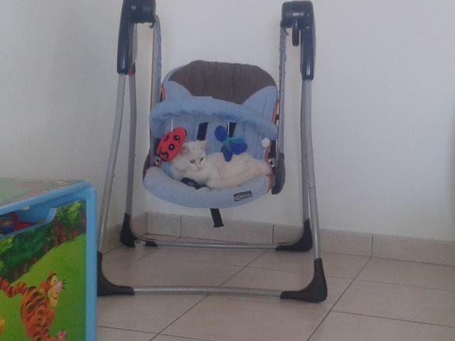 guizmo angora turc d'1 mois et demi  14764510