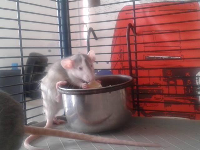 de retour chez les ratouphiles , voila mes princesses  Neytir10