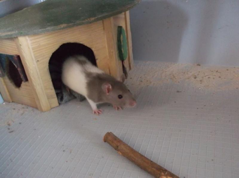 de retour chez les ratouphiles , voila mes princesses  Tiana10