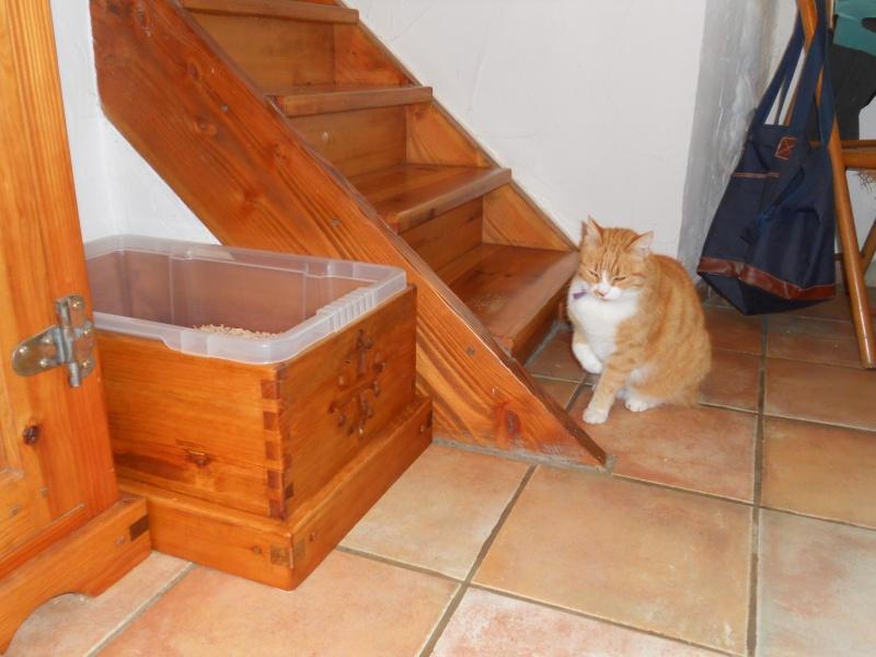 Une litière pour mes chats - Page 2 Dscn1310
