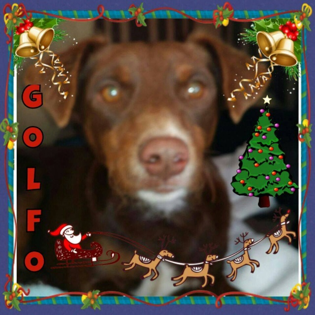 Canis - Golfo 15065310