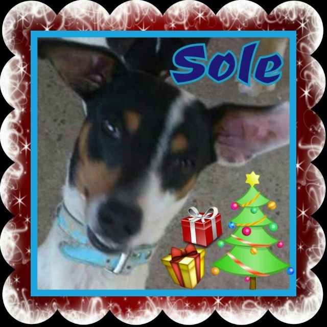 Canis - Sole 60121910