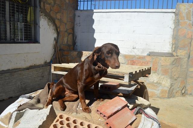 Canis - Duna 681f8151