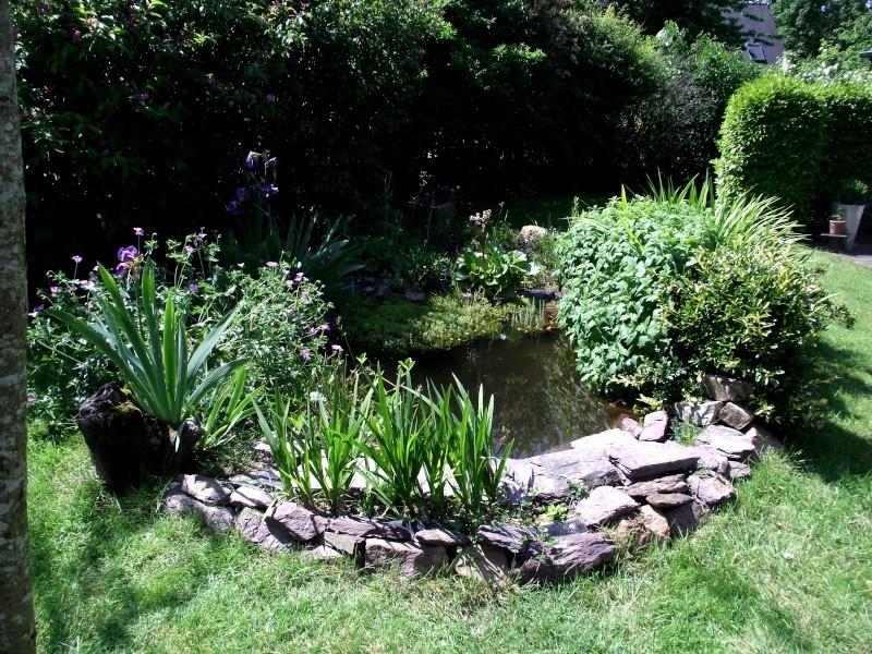 mon bassin de 1000 l - Page 2 Dscf5110