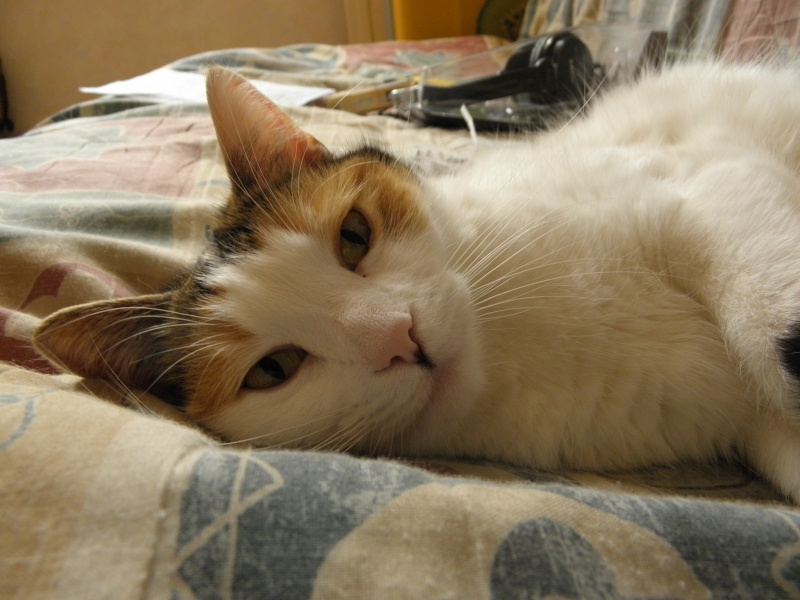 Havana, rebaptisée Chihiro, jolie tricolre environ 2 ans du côté de Limoges - Page 5 P3256416