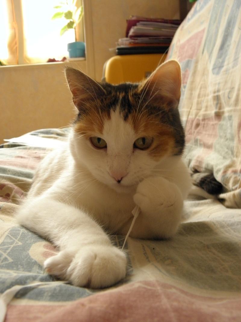 Havana, rebaptisée Chihiro, jolie tricolre environ 2 ans du côté de Limoges - Page 5 P3256417