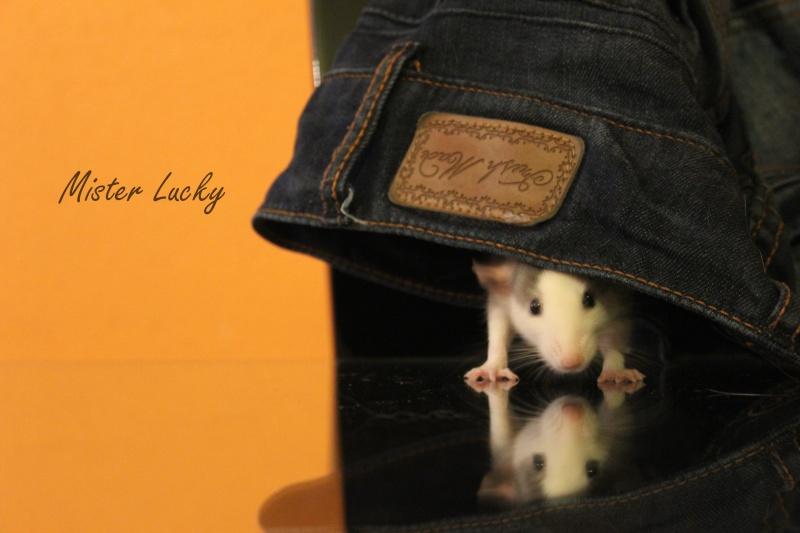 Mon petit Lucky ! Img_8410