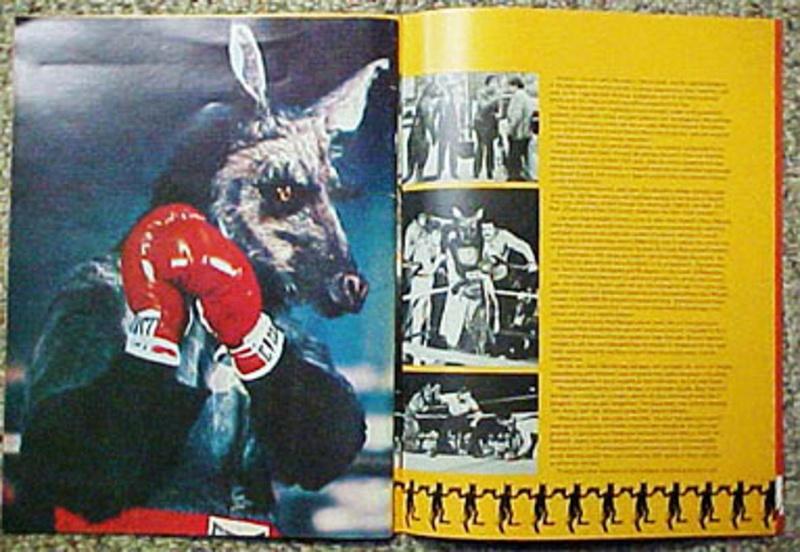 Circus Boxing Kangaroo Matild11