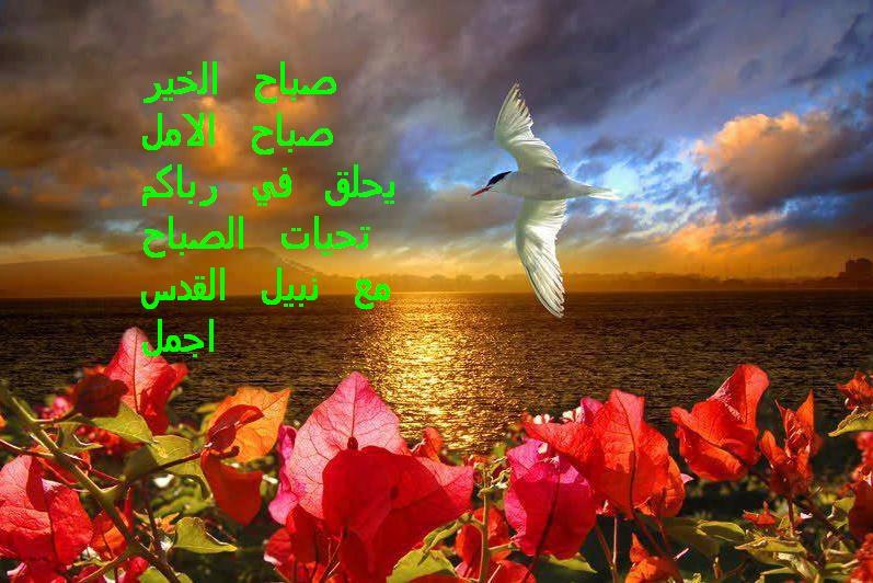 من هنا نقول صباح الخير - مساء الخير - زهرة اللوتس المقدسية  - صفحة 2 10_bmp10