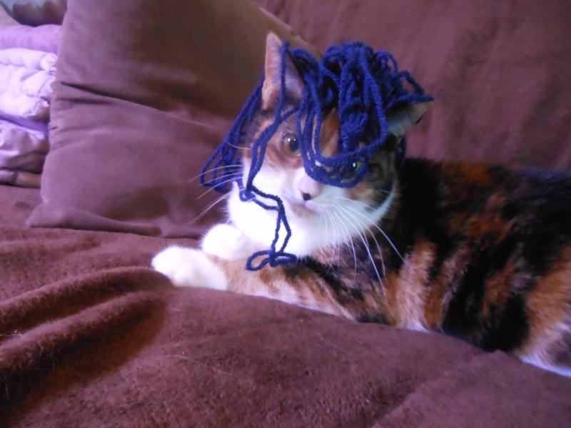 Canelle, chatte tricolore, née le 1 juillet 2011 - Page 5 Dscn0810