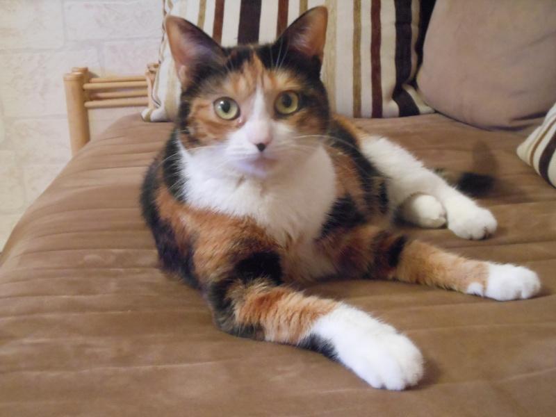 Canelle, chatte tricolore, née le 1 juillet 2011 - Page 5 Dscn1010