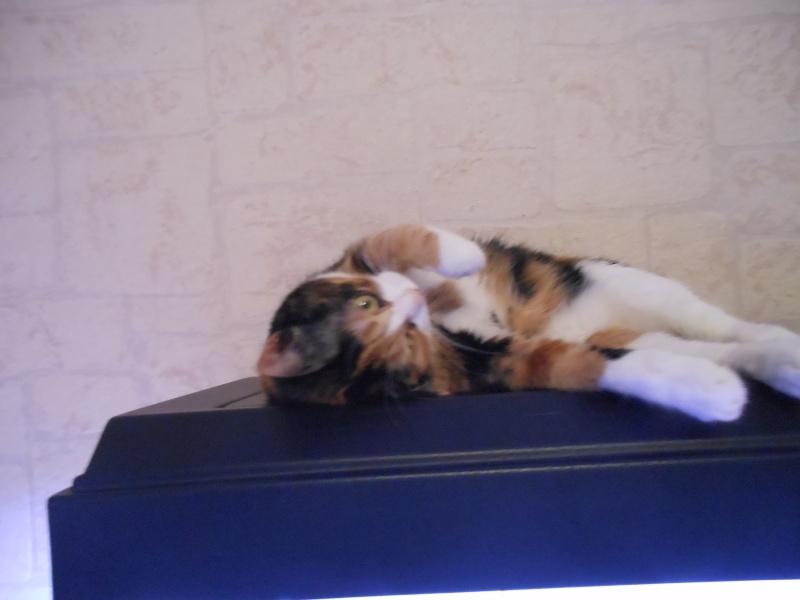 Canelle, chatte tricolore, née le 1 juillet 2011 - Page 5 Dscn1012