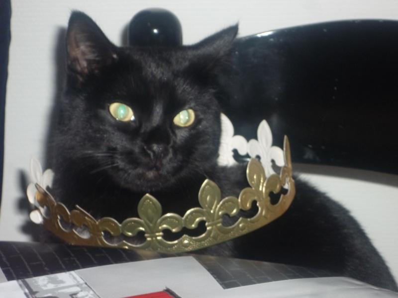 Harlem, chaton mâle noir, né en juillet 2012 - Page 1 Harlem10