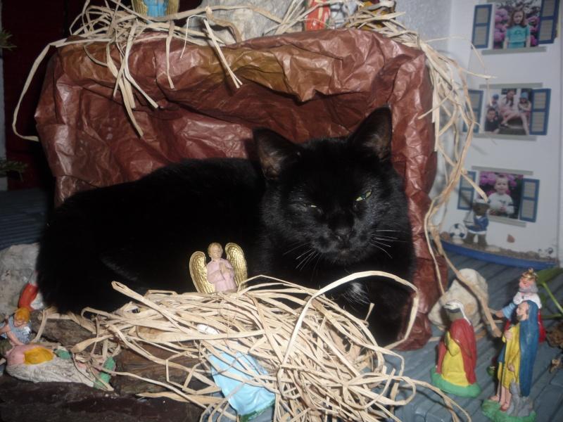 Harlem, chaton mâle noir, né en juillet 2012 - Page 1 Harlem11
