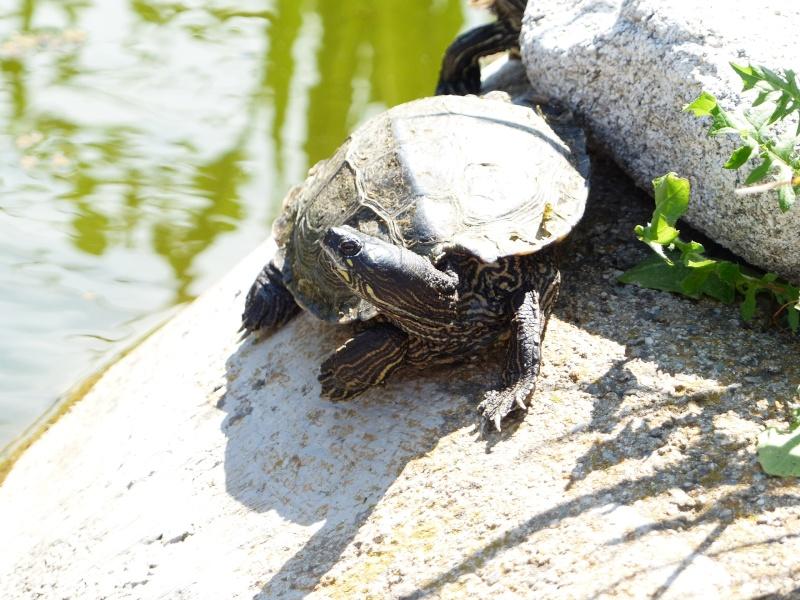 La Vallée des tortues - Sorède - 15.09.2012/13/04/2014 P1020210